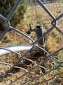 20470 Cactus Wren Drive - Photo 42