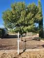20470 Cactus Wren Drive - Photo 47