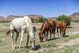 4150 Iron Horse Road - Photo 3