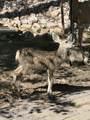 2296 Yellow Pine Trail - Photo 48