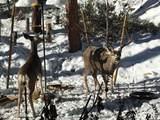 2296 Yellow Pine Trail - Photo 51
