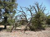 1024 Sierra Verde Ranch - Photo 10