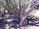 1024 Sierra Verde Ranch - Photo 6