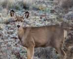 4880 Comanche Trail - Photo 23