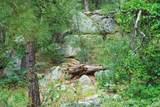 0000 Tanager Ridge Way - Photo 15