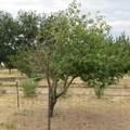 1096 El Rancho Road - Photo 11
