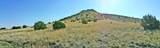 11925 Triple Crown Trail - Photo 7