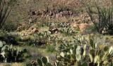 0 Bent Spur Road - Photo 7