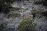 4880 Comanche Trail - Photo 57