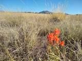 1412 Sonata Trail - Photo 4