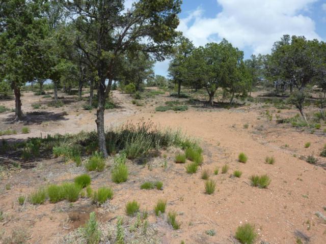 15777 N Lucy Lane, Prescott, AZ 86305 (#1003506) :: The Kingsbury Group