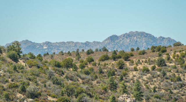 1328 E Pine Ridge Drive, Prescott, AZ 86303 (#1013011) :: Shelly Watne