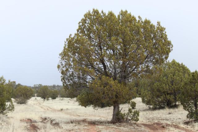 Tbd Antelope Run Rd, Seligman, AZ 86337 (#1019468) :: HYLAND/SCHNEIDER TEAM