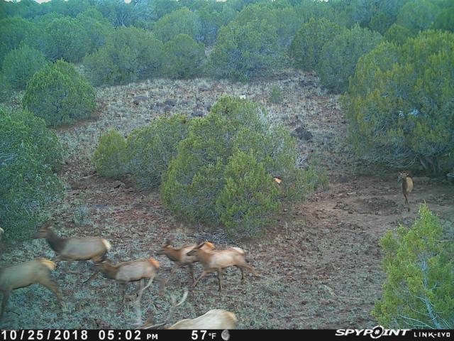 327 N Edwards Ranch Road, Ash Fork, AZ 86320 (MLS #1020387) :: Conway Real Estate