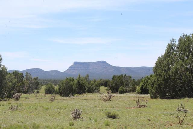 52600 N Spooky Owl Trail, Seligman, AZ 86337 (MLS #1029973) :: Conway Real Estate