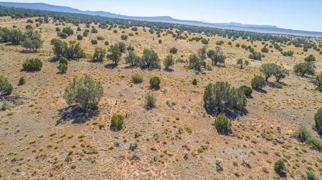 53500 Wrangler Ridge Road, Seligman, AZ 86337 (#1033675) :: Shelly Watne