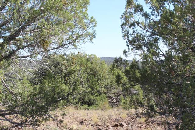 Tbd Cable, Seligman, AZ 86337 (MLS #1032993) :: Conway Real Estate