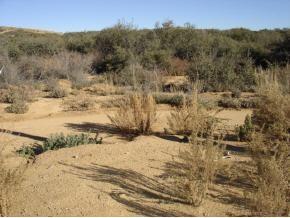 0 Purple Sage Trail, Dewey-Humboldt, AZ 86327 (#1011725) :: The Kingsbury Group