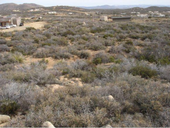 0 N Triple D Ranch Road N #0, Dewey-Humboldt, AZ 86327 (#941912) :: Shelly Watne