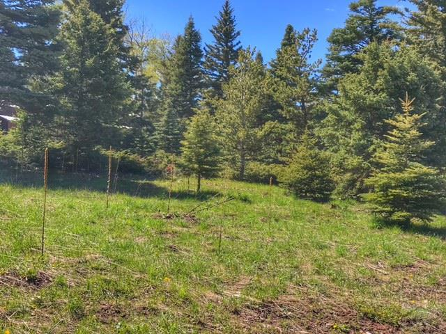 Lot 110A Panadero 110A, Cuchara, CO 81055 (MLS #173612) :: The All Star Team of Keller Williams Freedom Realty