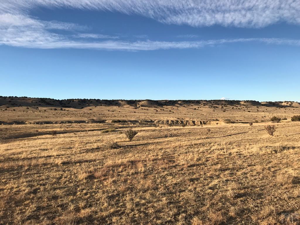 PAR 53 Horse Creek Rd - Photo 1