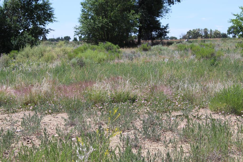 TBD Hidden Mesa Dr - Photo 1
