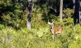 373 Bent Tree Rd - Photo 25