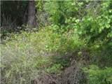 101 Green Heron Cir - Photo 8