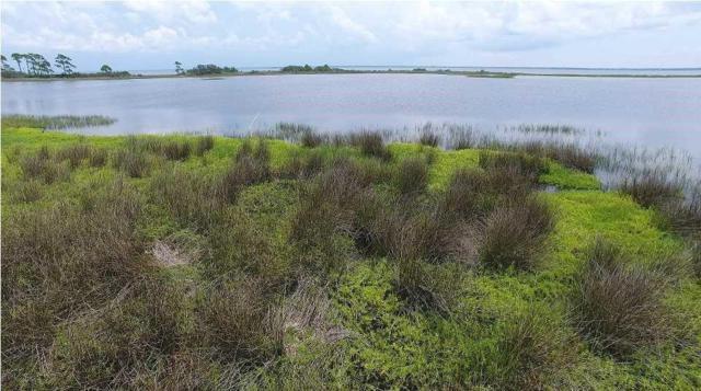 2 Cape San Blas Rd, CAPE SAN BLAS, FL 32456 (MLS #300090) :: Coastal Realty Group