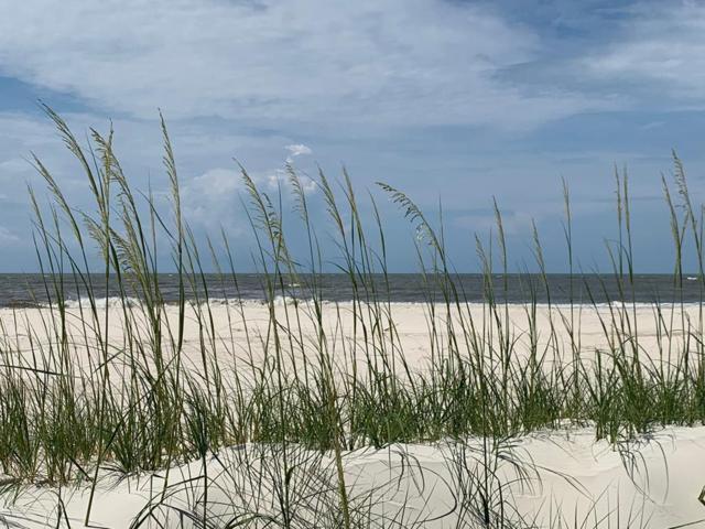 000 S Oak St, PORT ST. JOE, FL 32456 (MLS #301926) :: Anchor Realty Florida