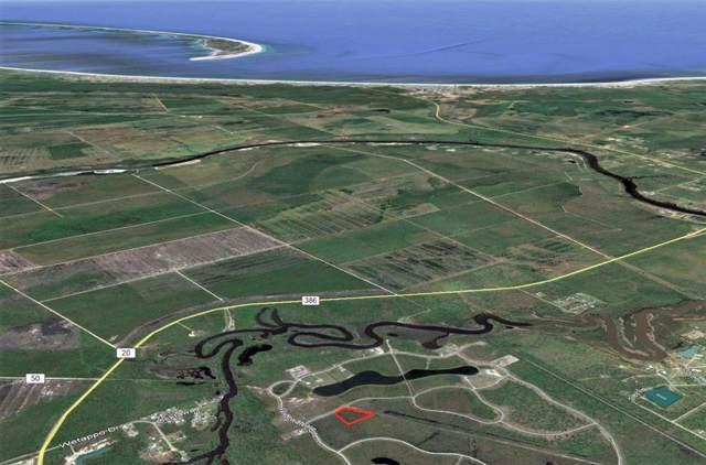 135 Torrey Pine Trl, WEWAHITCHKA, FL 32465 (MLS #303235) :: Coastal Realty Group