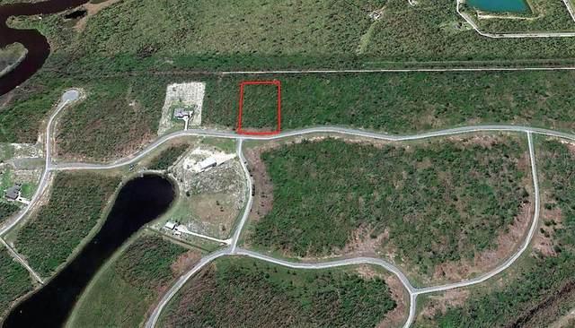 100 Wide Water Cir, WEWAHITCHKA, FL 32465 (MLS #305853) :: The Naumann Group Real Estate, Coastal Office
