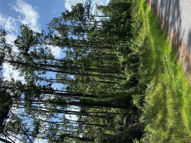TBD Maple Ave, WEWAHITCHKA, FL 32465 (MLS #305867) :: Anchor Realty Florida
