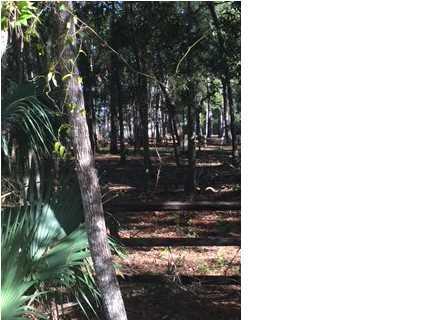 106 Cedar Oaks Ln, APALACHICOLA, FL 32320 (MLS #255438) :: Berkshire Hathaway HomeServices Beach Properties of Florida