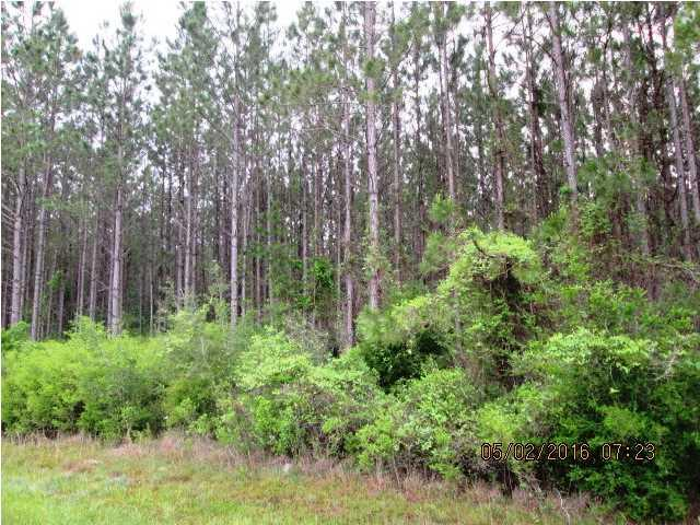 3 Hwy 381, WEWAHITCHKA, FL 32465 (MLS #256631) :: The Naumann Group Real Estate, Coastal Office