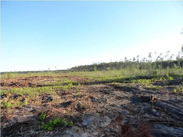 4 Hickory Hammock Rd, CARRABELLE, FL 32322 (MLS #259555) :: Berkshire Hathaway HomeServices Beach Properties of Florida
