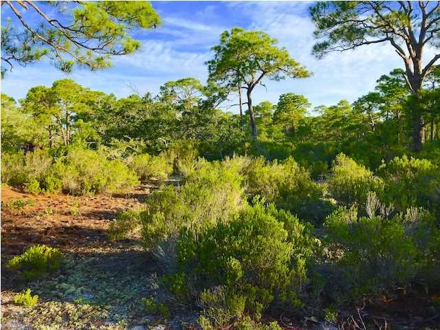335 Lubbers Ln, CARRABELLE, FL 32322 (MLS #262275) :: Berkshire Hathaway HomeServices Beach Properties of Florida