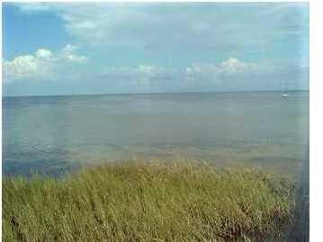 1 Cape San Blas Rd, CAPE SAN BLAS, FL 32456 (MLS #300088) :: Coastal Realty Group