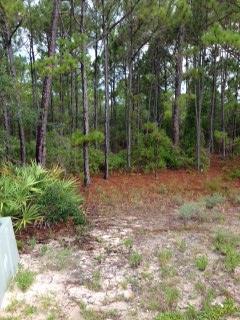 1232 Sea Pine Pl, ST. GEORGE ISLAND, FL 32328 (MLS #300788) :: CENTURY 21 Coast Properties