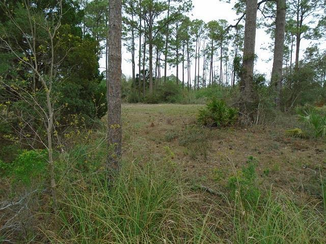 519 Shelly's Loop Rd, CARRABELLE, FL 32322 (MLS #300953) :: Coastal Realty Group