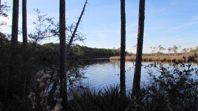 723 Mill Rd, CARRABELLE, FL 32322 (MLS #303379) :: Coastal Realty Group