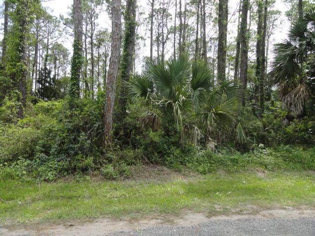 556 E Pine Ave, ST. GEORGE ISLAND, FL 32328 (MLS #304336) :: Coastal Realty Group