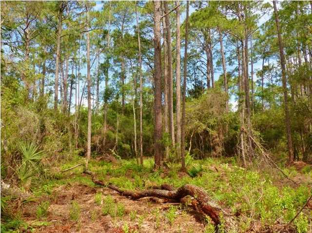 578 Walker Ln, APALACHICOLA, FL 32320 (MLS #262123) :: Coastal Realty Group