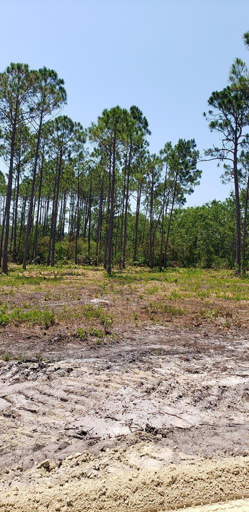 14 Oak Grove Ave, PORT ST. JOE, FL 32456 (MLS #262200) :: CENTURY 21 Coast Properties