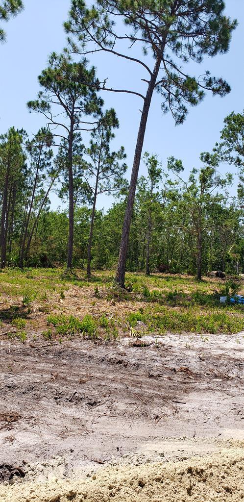 23 Oak Grove Ave, PORT ST. JOE, FL 32456 (MLS #262210) :: CENTURY 21 Coast Properties