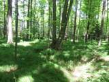 Birchwood Lane - Photo 2