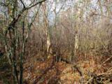 Black Oak Court - Photo 3