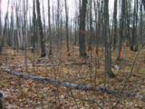 Birch Lane - Photo 2