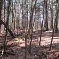 N3808 Deer Path - Photo 46