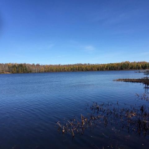 White Eye Lake Road, Crandon, WI 54520 (#50178684) :: Dallaire Realty